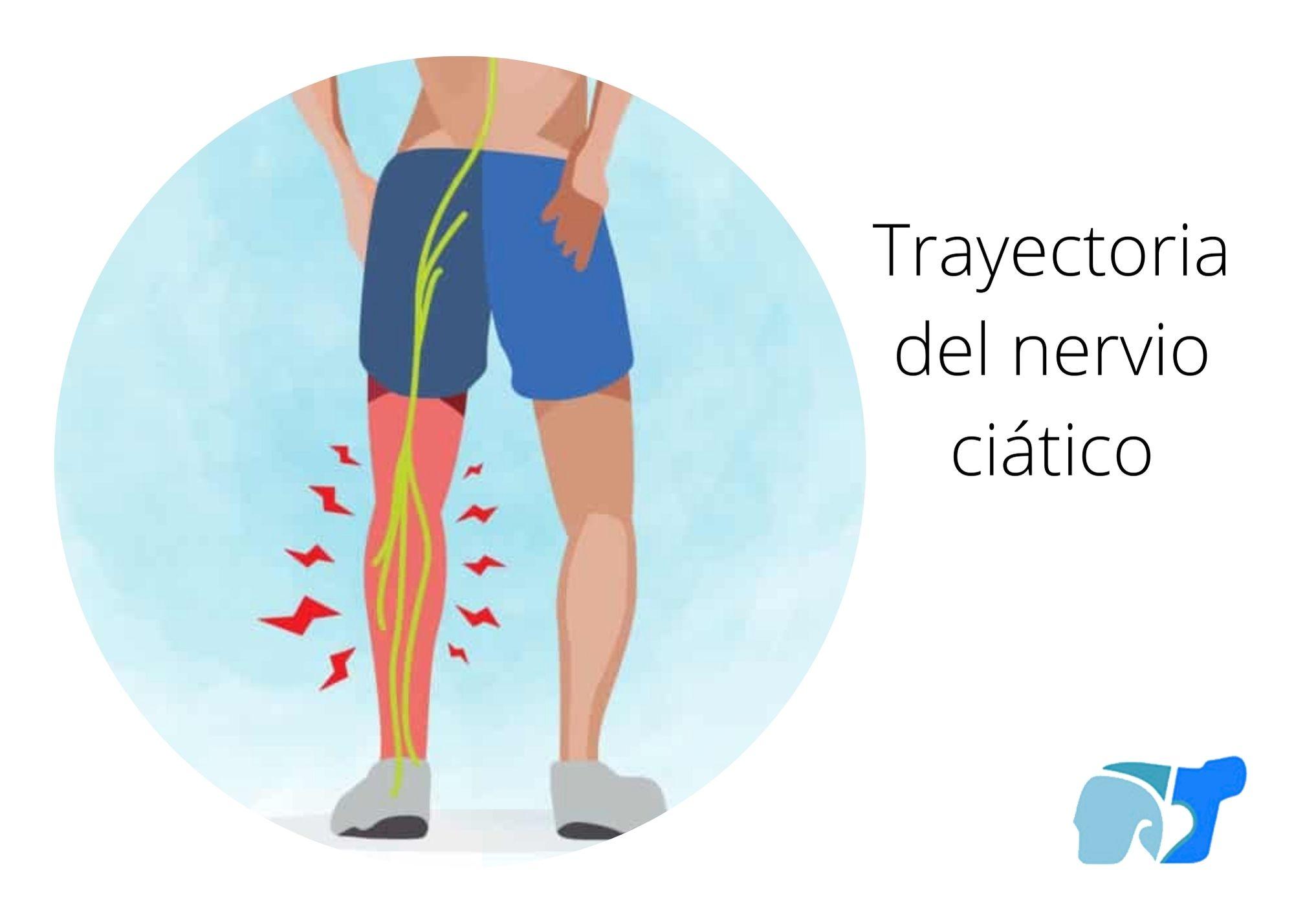 trayectoria-del-nervio-ciatico