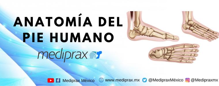 Anatomía del pie humano